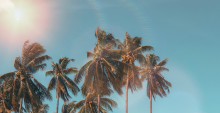 picture of palm trees and clear skies